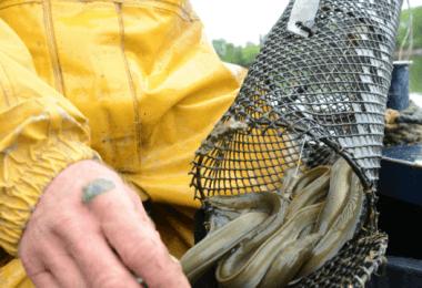 accessoire-peche-anguille